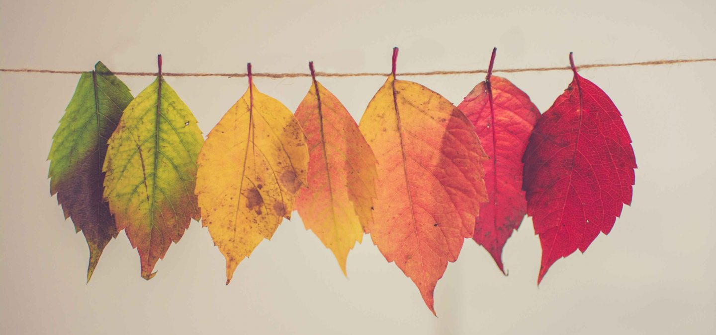 Leaves of different colors, from green to red.